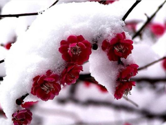 Beautiful Flowers In The Snow
