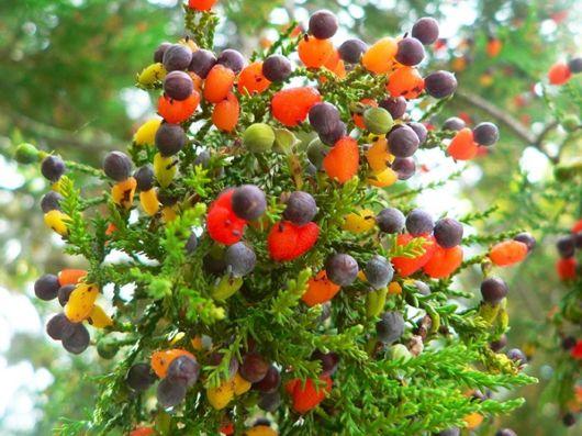 A Tree That Bears 40 Kinds Of Fruits