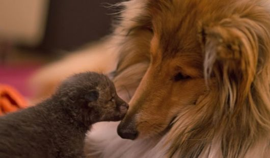 The Fox And The Hound, A Touching Story