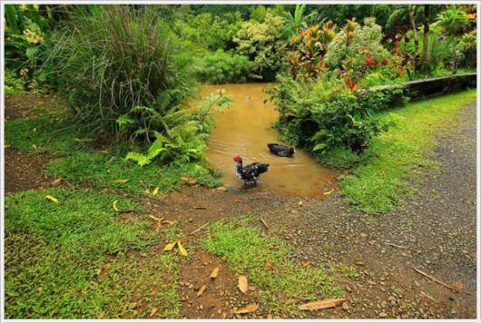 The Beautiful Green Gardens Of Maui