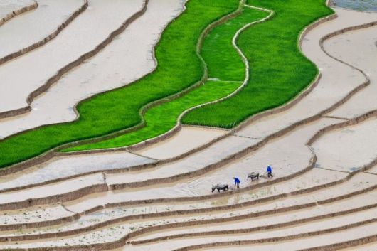 Beautiful Rice Terraces Fields Of Vietnam