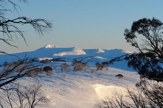 Beautiful Snowy Mountains Of Australia