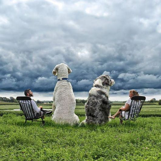 Photographer Photoshops His Dog Into A Giant