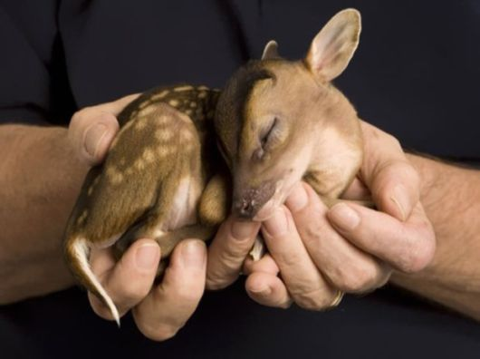 The Cutest Adorable Baby Animals