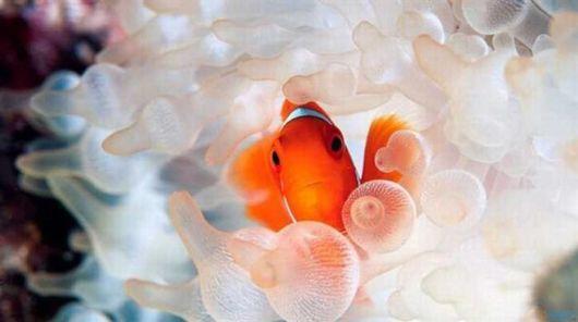 The Cutest Ocean Dwellers