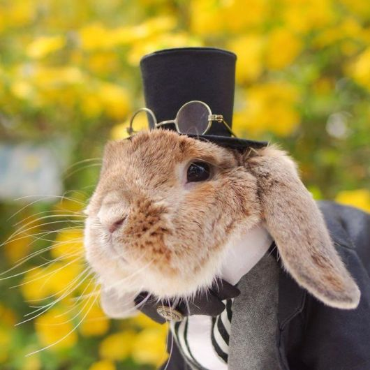 Meet PuiPui, The Worlds Most Stylish Bunny