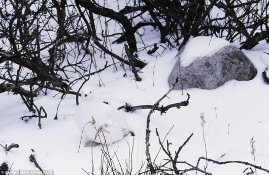 Can You Spot The Invisible Animals?